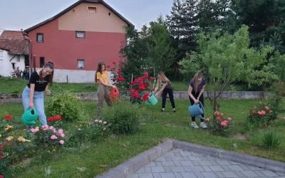 Ruže Frame Bučići